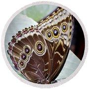 Blue Morpho Butterfly Costa Rica Round Beach Towel
