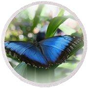 Blue Morpho Butterfly Dsc00575 Round Beach Towel