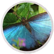 Blue Morpho Round Beach Towel