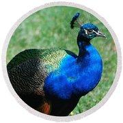 Blue Peafowl Round Beach Towel