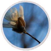 Blue Sky Magnolia Blossom - Dreaming Of Spring Round Beach Towel