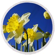 Blue Sky Spring Bright Daffodils Flowers Round Beach Towel