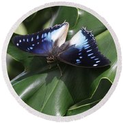 Blue-spotted Charaxes Butterfly #2 Round Beach Towel