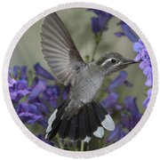 Blue-throated Hummingbird Round Beach Towel