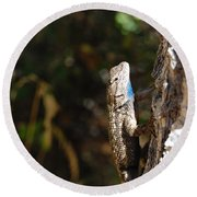 Blue Throated Lizard 2 Round Beach Towel