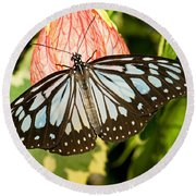 Blue Tiger Butterfly Round Beach Towel