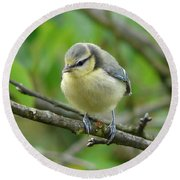 Blue Tit In A Cherry Tree Round Beach Towel