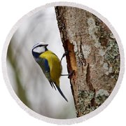 Blue Tit Searching Home Round Beach Towel