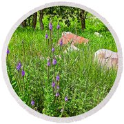 Blue Vervain And Rocks In Pipestone National Monument-minnesota  Round Beach Towel