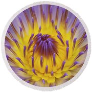 Blue Water Lily Round Beach Towel by Heiko Koehrer-Wagner