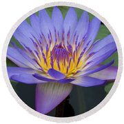 Blue Water Lily - Nymphaea Round Beach Towel by Heiko Koehrer-Wagner