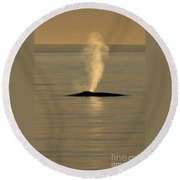 Blue Whale At Sunset In Monterey Bay California  2013 Round Beach Towel