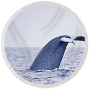 Blue Whale Tail Fluke With Remoras Round Beach Towel