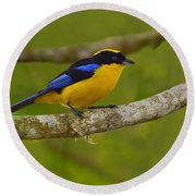 Blue-winged Mountain Tanager Round Beach Towel