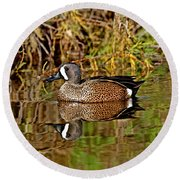 Blue-winged Teal Drake Round Beach Towel