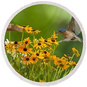 Bluebird Flying Over The Black Eyed Susans Round Beach Towel