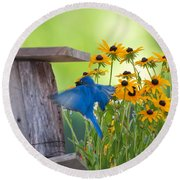 Bluebird Flying Thru Black Eyed Susans Round Beach Towel