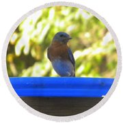 Bluebird Frisbee Round Beach Towel