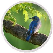 Bluebird In The Morning Round Beach Towel