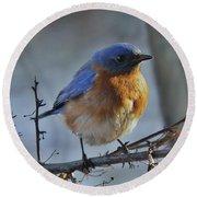 Bluebird In The Snow. Round Beach Towel