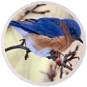 Bluebird Round Beach Towel