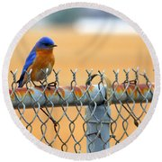 Bluebird On A Fence Round Beach Towel