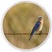 Bluebird On A Wire Round Beach Towel