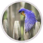 Bluebird On The Fence Round Beach Towel