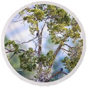 Bluebird Tree Round Beach Towel