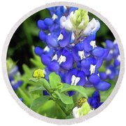 Bluebonnets Blooming Round Beach Towel