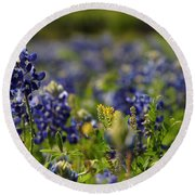 Bluebonnets In Spring Round Beach Towel
