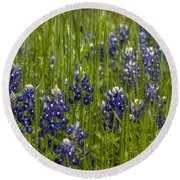 Bluebonnets In The Grass Round Beach Towel