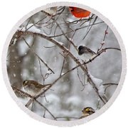 Blushing Red Cardinal In The Snow Round Beach Towel