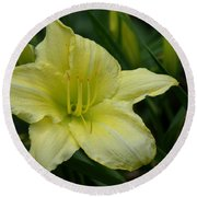 Blushing Yellow - Lilies Round Beach Towel
