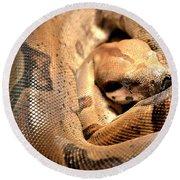 Boa Constrictor Round Beach Towel