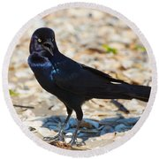 Boat-tailed Grackle Round Beach Towel