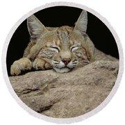 Bobcat, Arizona Round Beach Towel