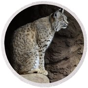 Bobcat Round Beach Towel by Bob Christopher