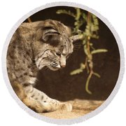 Bobcat Round Beach Towel by James Peterson