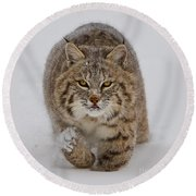 Bobcat Running Forward Round Beach Towel by Jerry Fornarotto
