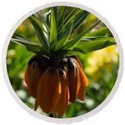 Bold And Showy Orange Crown Imperial Flower  Round Beach Towel