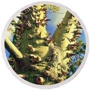 Bombacaceae - Floss Silk Tree - Chorisia Speciosa Hawaii Round Beach Towel