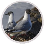 Bonaparts Gull's Round Beach Towel
