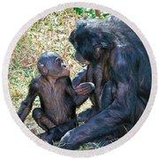 Bonobo Adult Talking To Juvenile Round Beach Towel