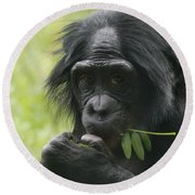 Bonobo Eating Round Beach Towel