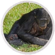 Bonobo Round Beach Towel