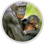 Bonobo Pan Paniscus Mother And Infant Round Beach Towel