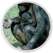 Bonobo Pan Paniscus Nursing Round Beach Towel