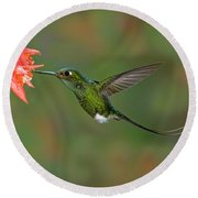 Booted Racket-tail Hummingbird Round Beach Towel