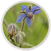Borage Wildflower - Borage Officinalis - Annual Herb Round Beach Towel